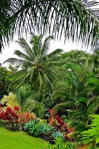 Best 25 Tropical Backyard Landscaping Ideas On Pinterest ...