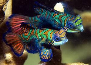 Top 3 Most Beautiful Fish - HD Animal Wallpapers