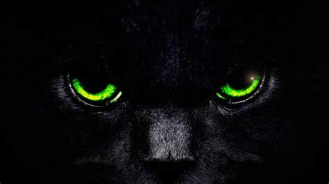 Cat Eyes Wallpaper