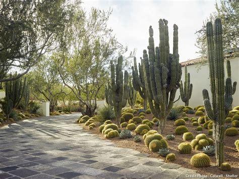 Bienfaits Du Cactus Dans Une Maison by Amenagement Jardin Misez Sur Le Cactus