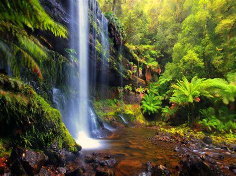 Forest Backgrounds Cool  Hd Desktop Wallpapers  4k Hd