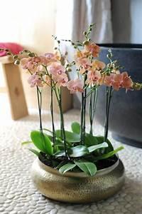Rempoter Une Orchidee : les 25 meilleures id es de la cat gorie orchid es sur ~ Mglfilm.com Idées de Décoration