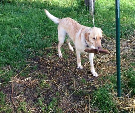 Dog Toys Picmia