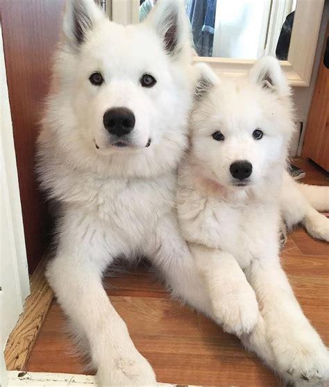 25 Best Ideas About Cute Dogs On Pinterest Cute Doge