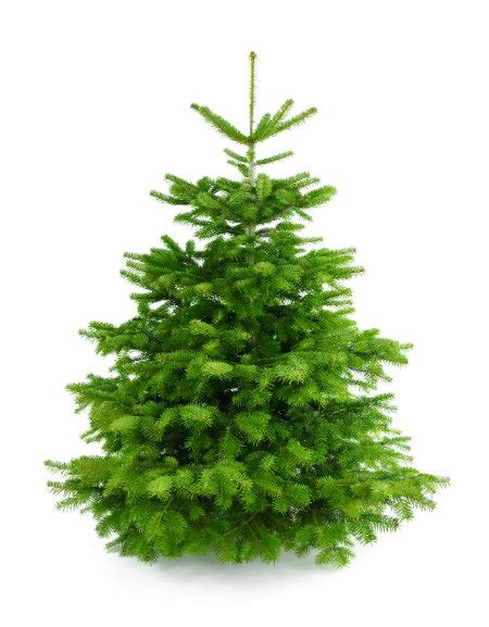where to get a christmas tree in willoughby hills oh