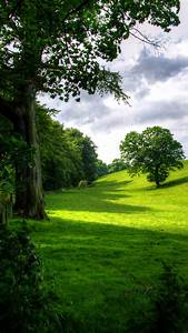 Green, Park, Hd, Wallpaper, For, Your, Mobile, Phone