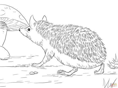 Long Eared Hedgehog Coloring Page Free Printable