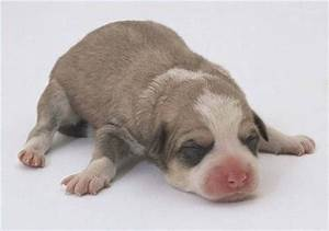 How to Take Care of Newborn Puppies That Are Outside ...