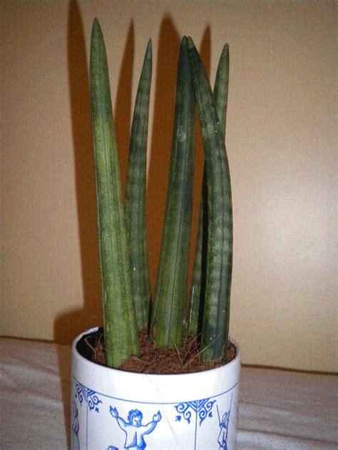 unbekannte pflanze bestimmen pflanzen zimmerpflanzen
