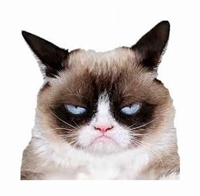 Grumpy Cat Cats Meme Memes Funny Fok