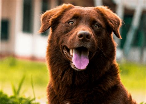 Heavy Shedding Dogs by Help How Can I Treat Excessive Shedding In My