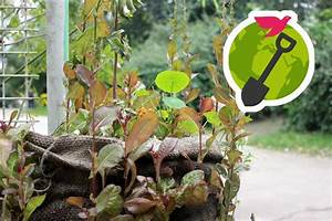 Was Können Sie Tun Um Die Umwelt Zu Schonen : f r eine bessere welt menschen ideen visionen ~ Watch28wear.com Haus und Dekorationen