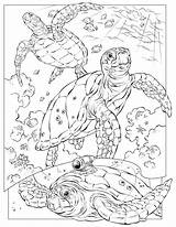 Coloring Ocean Pages Animal Printable Sea Animals Adult Creatures Adults Colouring Detailed Sheet Realistic Oceans Themed sketch template