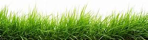 Green-Grass-17.png (2500×680) | Tree_alpha | Pinterest ...