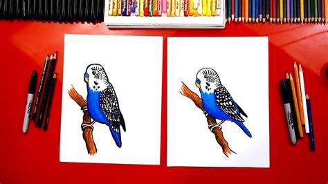 draw  budgie parakeet art  kids hub