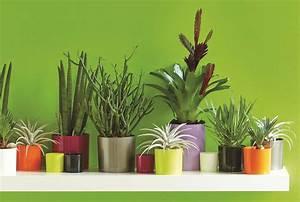 Plante D Intérieur : conseil donnez du style votre maison plantes d ~ Dode.kayakingforconservation.com Idées de Décoration