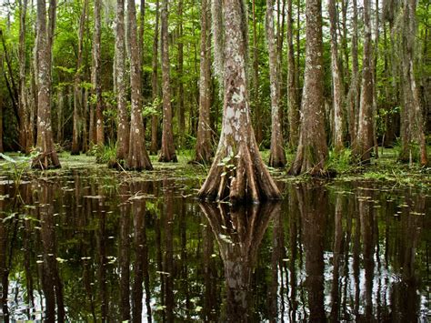 bayou national geographic society