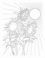 Sunflowers Coloring Pages Adult Printable Delfyn Sunflower Adults sketch template