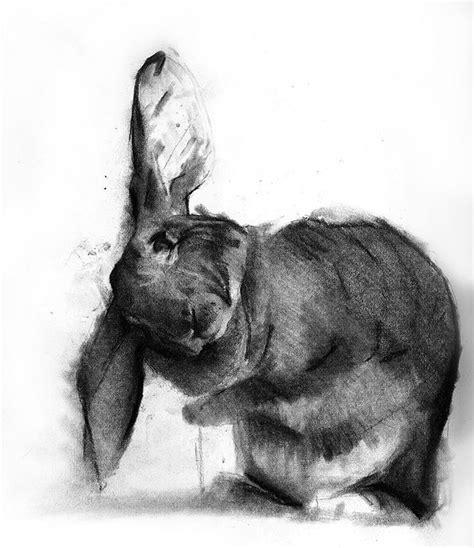 bunnies   favourite images  pinterest