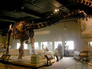 Apatosaurus Museum of Natural History Chicago