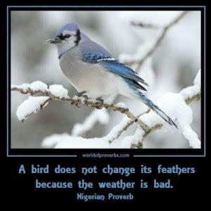 Famous Quotes About Birds. QuotesGram