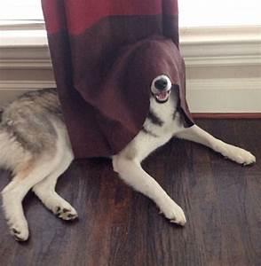 Boule Anti Poil Machine A Laver : 20 chiens pas tr s malins ont trouv la cachette parfaite d 39 apr s eux les photos sont tr s ~ Melissatoandfro.com Idées de Décoration