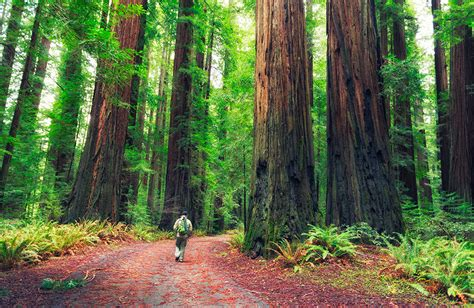 Forest Migration in the Face of Climate Change - American ...