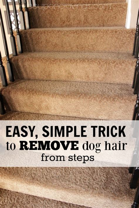 how to remove dog hair from sofa how to easy dog hair removal from couch stairs and more