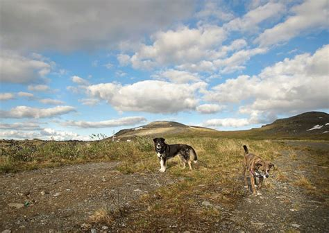 Dogs Take an Epic Road Trip Into the Wilderness of Alaska ...