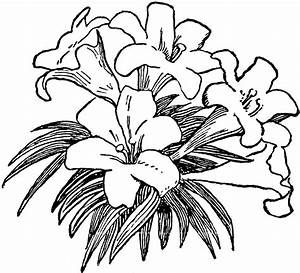 Easter Lily Clip Art - ClipArt Best