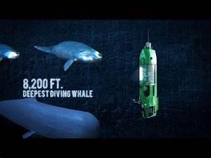 Cryptomundo  U00bb Deepest Solo Dive Ever  Were Sea Monsters