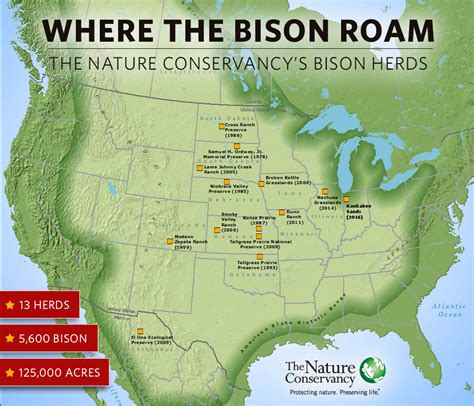 where the bison roam the nature conservancy