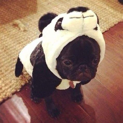 cute costumed critters cuteness overflow
