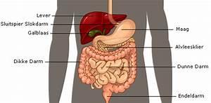 waar ligt de pancreas in het menselijk lichaam