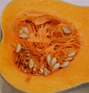 Butternut Squash Seeds - Ingredients Descriptions and ...