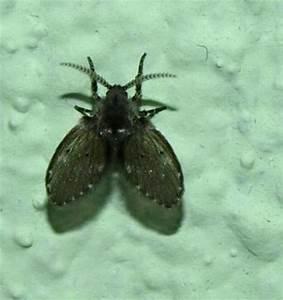 Fliegen Vertreiben Wohnung : was sind das f r insekten welche fliegenart fliegen ~ Whattoseeinmadrid.com Haus und Dekorationen