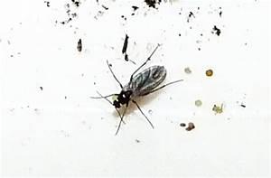 Kleine Mücken In Der Blumenerde : trauerm cken wir sind im garten ~ Lizthompson.info Haus und Dekorationen