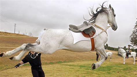 horse dangerous kicks attacks terrifying