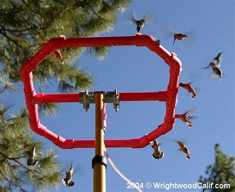 world s largest hummingbird feeder