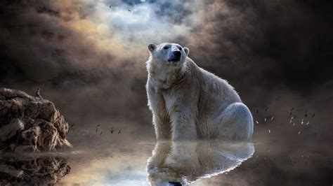 wallpaper polar bear moon reflections man rocks dream