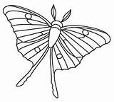 Moth Menagerie Strijkkralen Groente Kralenplank Motte Designlooter Einzigartig Overlap Delicately sketch template