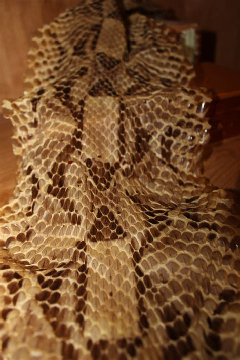 Snake Skin Shed Identification by Snake Thread 2016 Page 35 Texags