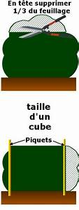 Comment Tailler Une Haie De Laurier : tailler et former les topiaires ~ Melissatoandfro.com Idées de Décoration
