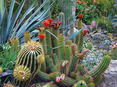 Close-up of Cactus · Free Stock Photo