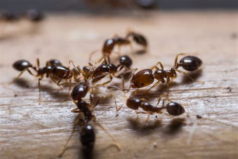 The Most Common Types Of Ants In Utah Can Damage Your Home