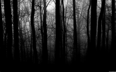 black  white images  trees  cool hd wallpaper