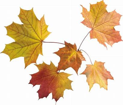 Leaves Autumn Fall Clipart Ground