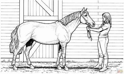 Coloring Horse Pages Printable Adults Popular