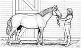 Coloring Horse Pages Printable Adults Popular sketch template