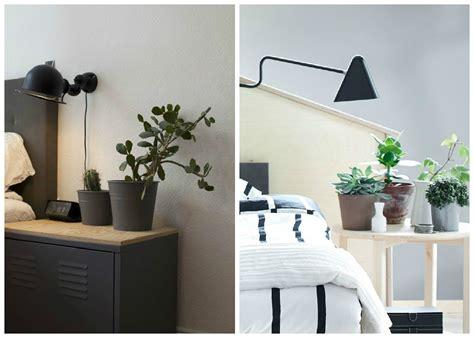 plante dans chambre plantes d 39 intérieur décorez avec des plantes vertes
